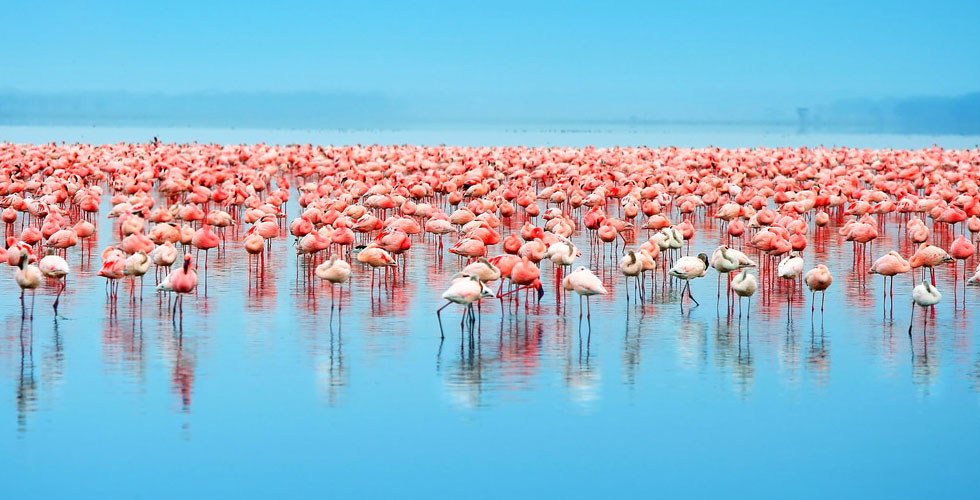 تهديد بيئي لبحيرة ناكورو  موطن الفلامنكو