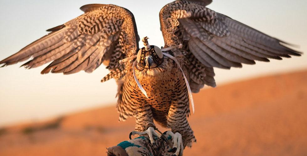 مهرجان الشيخ زايد التراثي للصيد بالصقور
