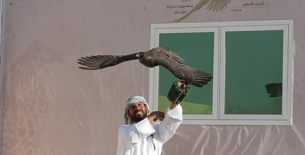 ختام مهرجان الشيخ زايد للصقور