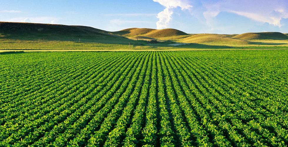 رأي السبّاق:تراجع الدعم الزراعي