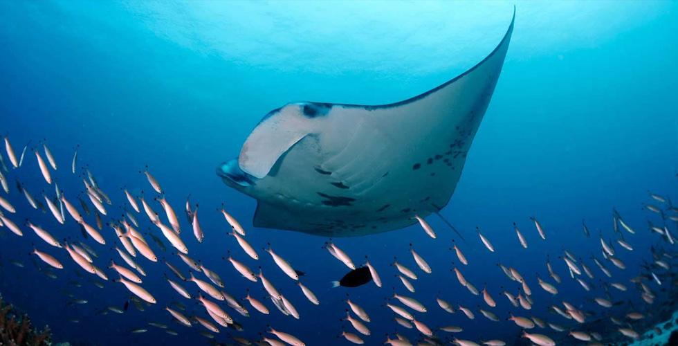 Carl F. Bucherer يحمي كنوز المحيط