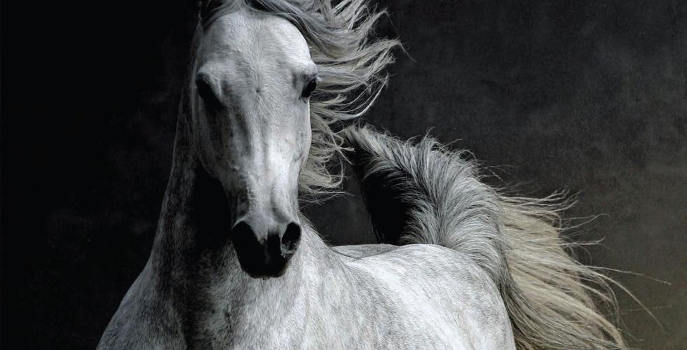 الإمارات  تعزّز أنشطة الخيول العربية