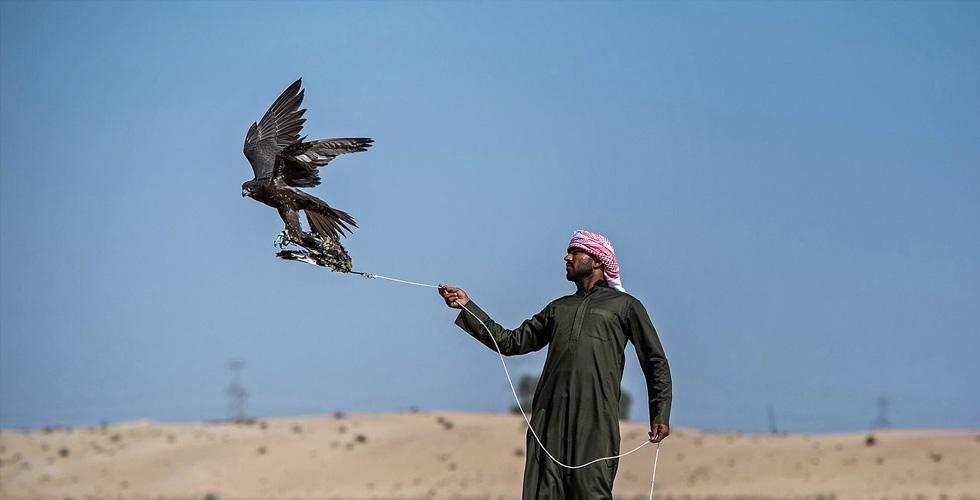 أغلى الألقاب للصقارين في دبي