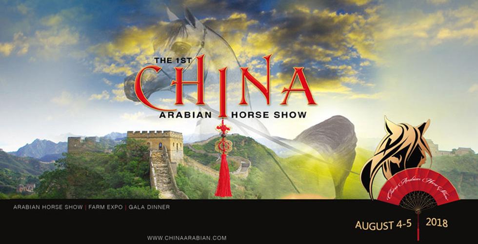 لأول مرة الخيول العربية الأصيلة في الصين