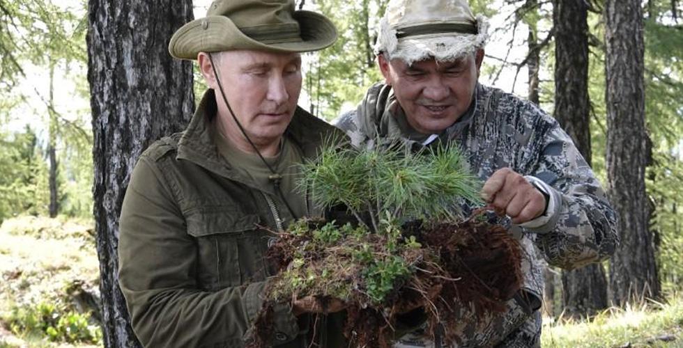 الرئيس الروسي الحيويّ في عطلة في غابات سيبيريا