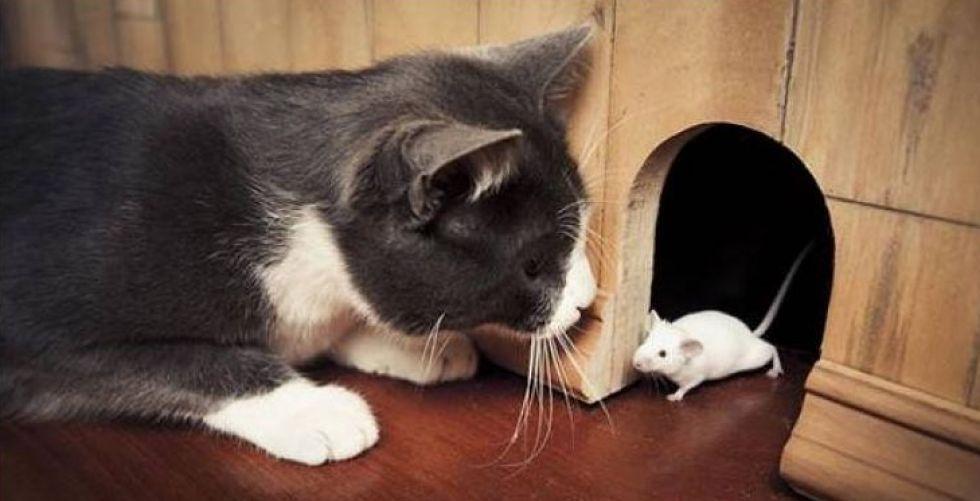 فئران من دون أب فهل تشمل هذه الظاهرة البشر؟