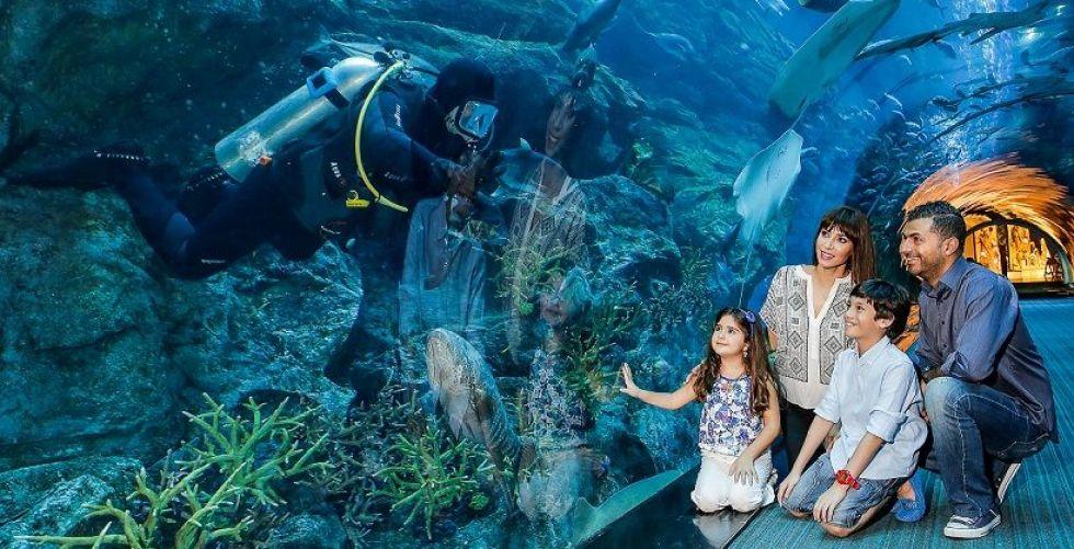 أفضل حوض أكواريوم في العالم
