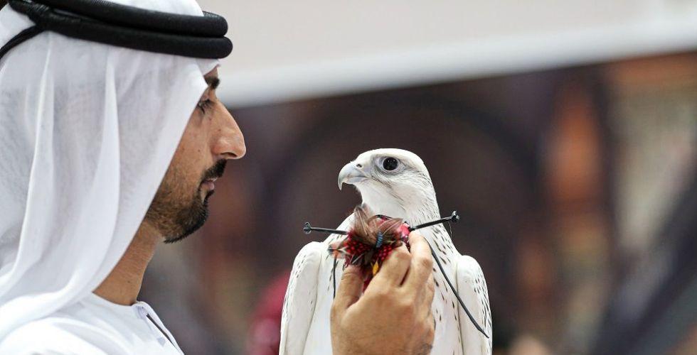 معرض أبوظبي الدولي للصيد والفروسية 2019