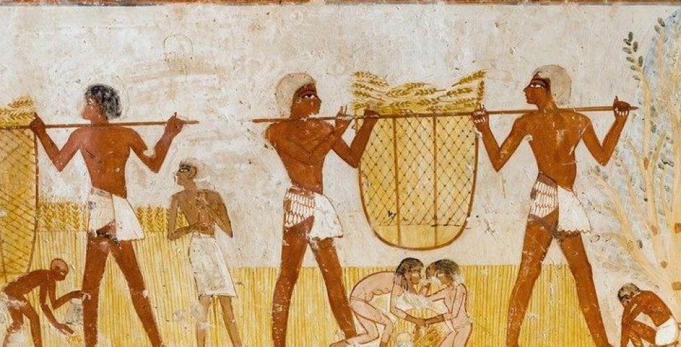 اكتشاف مقبرة فرعونية جميلة ومحنطات حيوانات