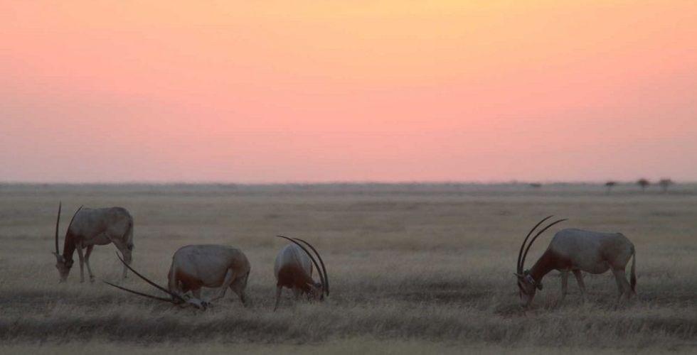 إكسبو يشكّل تحالفا لحماية الطبيعة والحياة البرية
