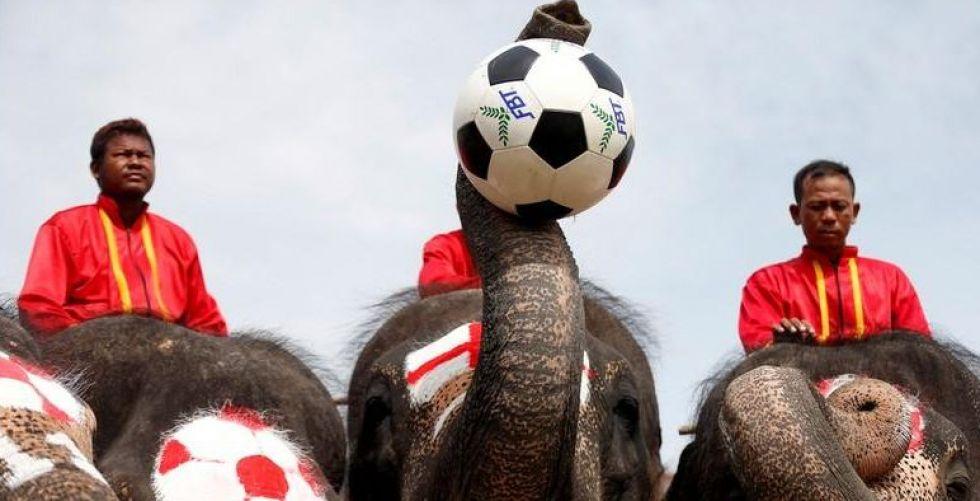 حين تشارك الأفيال في مونديال٢٠١٨