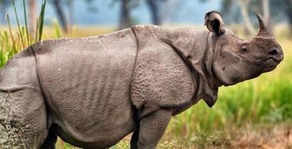 انقراض وحيد القرن السومطري في ماليزيا