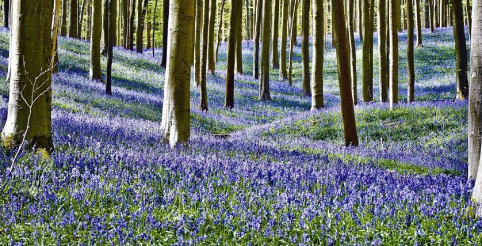الغابة الزرقاء في بلجيكا تدعوك