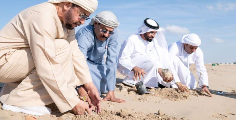 زراعات مليونية لشجرة القرم في الامارات