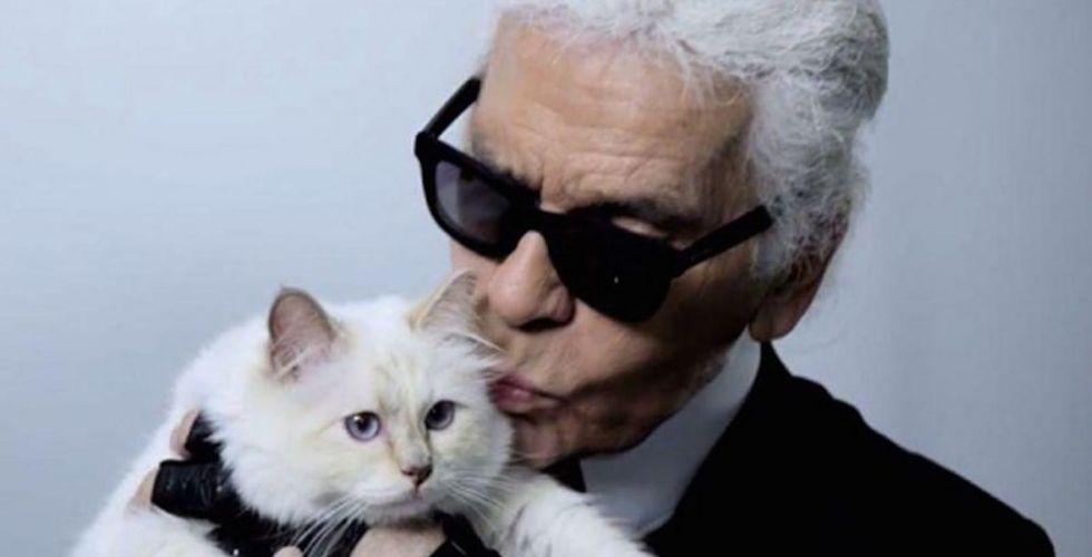 القطّة تشوبيت الوريثة المحتملة للمصمّم كارل لاغرفيلد