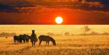مُتعة السّفر إلى أفريقيا