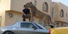 ما لن تراه إلا في دبي