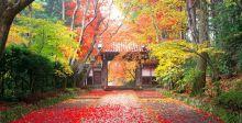 ما اجمل الخريف في آسيا