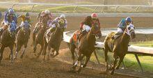 الخيول العربية تتنافس في لوس انجلوس