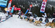 Hublot وسباق تزلّج الكلاب