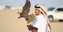 حين تتنافسُ الصقور في أجواء قطر