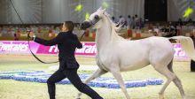 عشّاق الخيول يتوجهون الى دبي