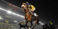 كأس دبي العالمي للخيل ينطلق بالإبهار