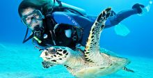 السباحة مع السلاحف في سيبادان