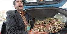 هل ينجح اليمن في مواجهة القات؟