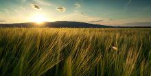 رأي السبّاق: التنمية الريفية عربيا