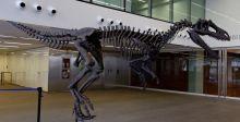 اكتشاف ديناصور مفترس في الارجنتين