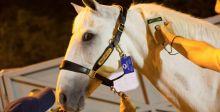خيول الألعاب الأولمبية في ريو