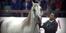 خيول عربية في بطولة أوروبية