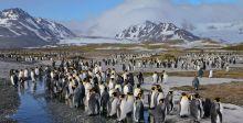 البطريق الافريقي مهدد بالانقراض