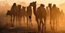 أكبر مهرجان تراثي في السعودية