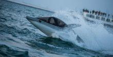 قرش البحر يغزو معرض دبي