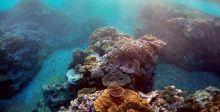 محاولات دولية لانقاذ المرجان