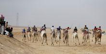 سباق الهجن يجذب الاوروبيين الى سيناء