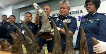 ماليزيا تحبط تهريب قرون وحيد القرن