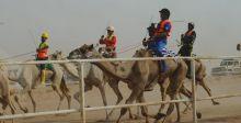 للهجن سباقاته الصيفية في السعودية