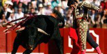 ممنوع قتل الثيران في حلبة المصارعة الاسبانية