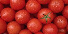 الطماطم والفاكهة تكافح مخاطر التدخين