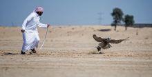 أغلى الجوائز في كأس رئيس الإمارات لصيد الصقور