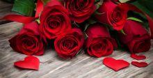 الورد الأحمر أجمل هدايا عيد العشاق
