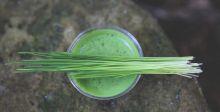 عشبُ القمح يكافح السرطان والكولستيرول أيضا