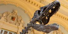 ديناصور لحمي في مزاد للبيع