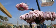 أكبر شجرة زهر كرز من مكعبات ليغو