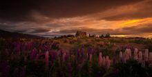 نيوزيلانده: متعة السفر الفعلية