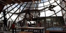 ديناصور مجهول يُباع في باريس