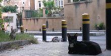 هل تصبح بيروت عاصمة القطط في الشرق الأوسط؟
